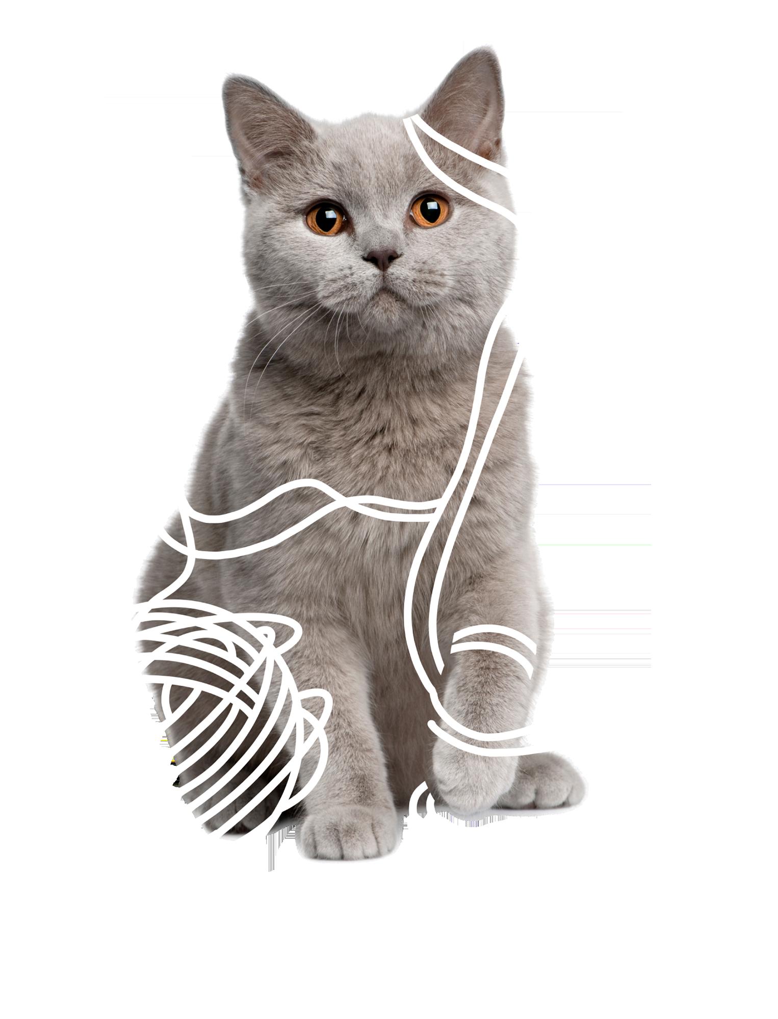 Kitten with Yarn